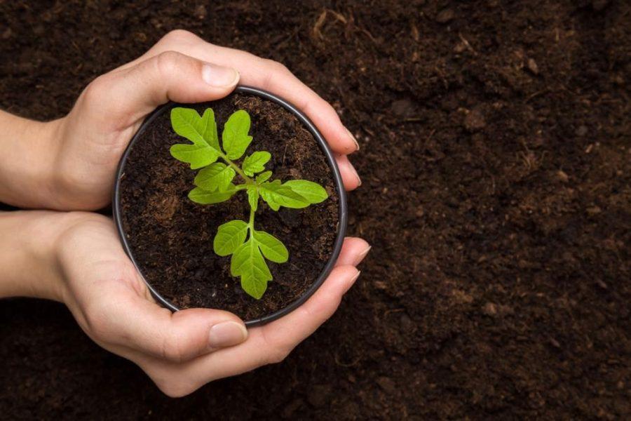 Cải tạo đất trồng cây trong chậu và nội thất