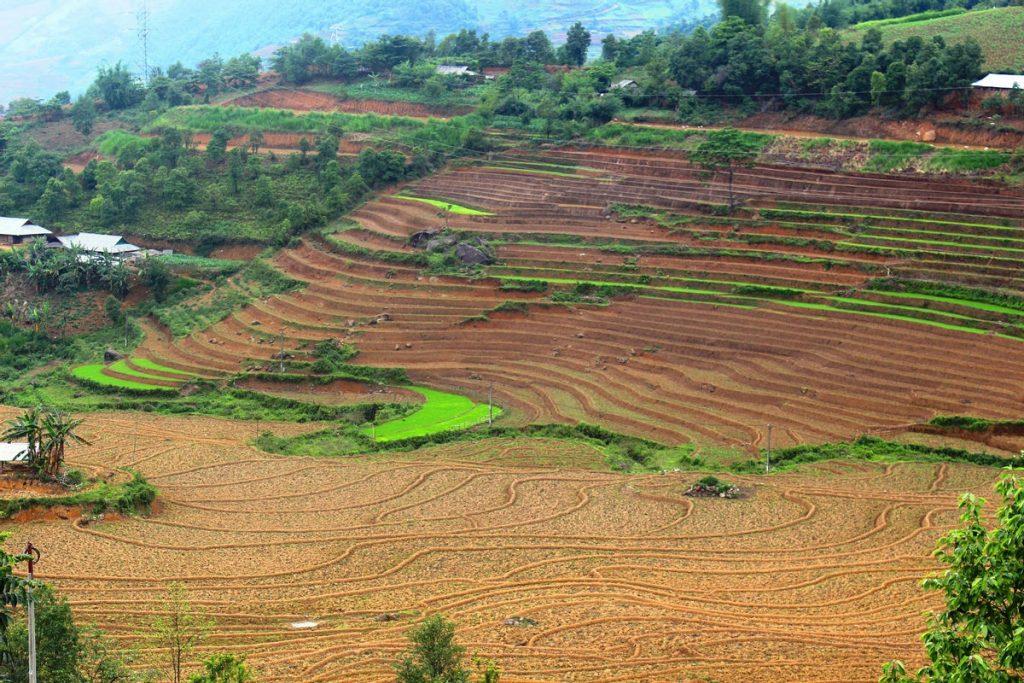 Hướng dẫn các cách cải tạo đất đồi hiệu quả nhất