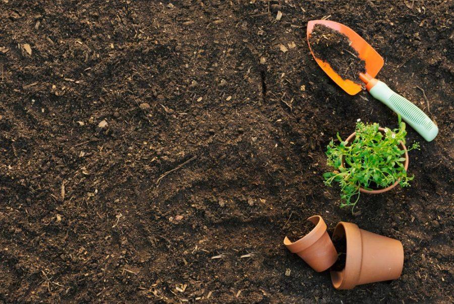 Cải tạo đất trồng thúc đẩy phát triển nông nghiệp