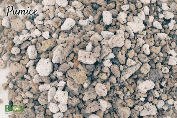 Công dụng của đá Pumice trồng cây kiểng và bonsai