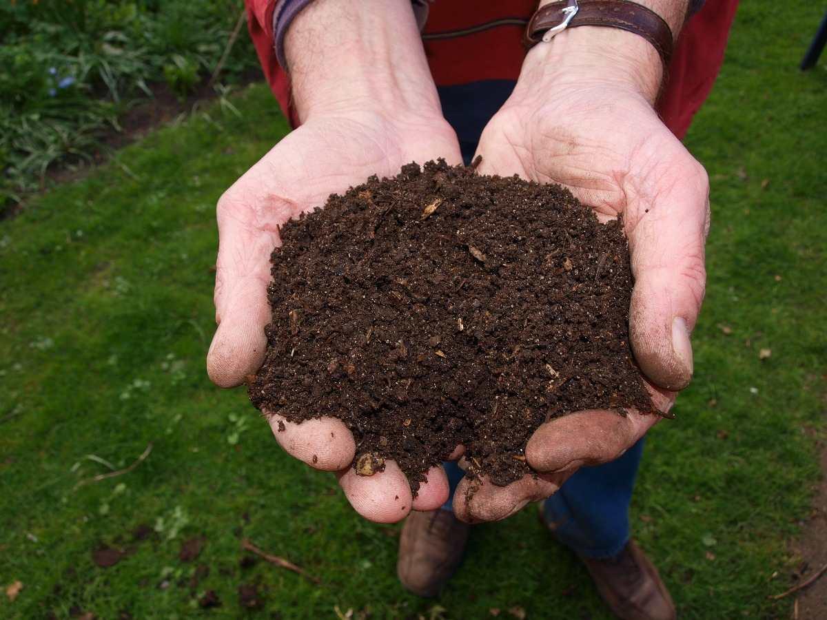 Nguyên liệu sản xuất đất sạch đóng bao: phân trùn quế