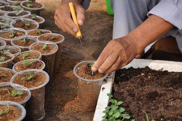 gieo hạt bằng mụn dừa