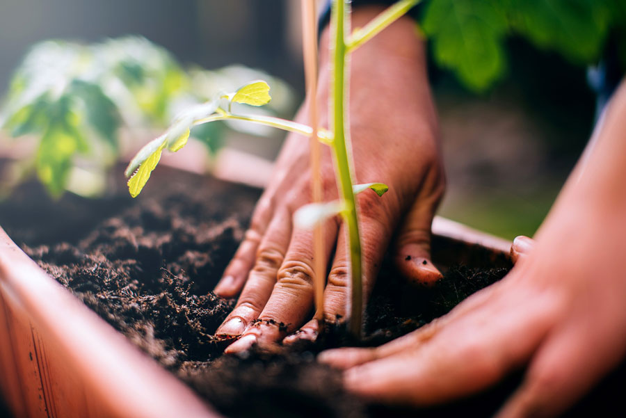 Tái sử dụng đất trồng rau