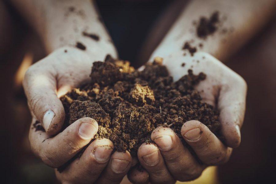 rau húng lủi bón phân trùn quế được không?