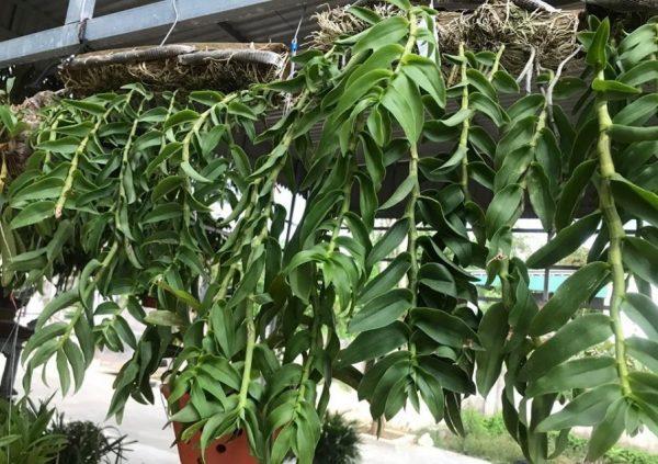 xơ dừa trồng lan