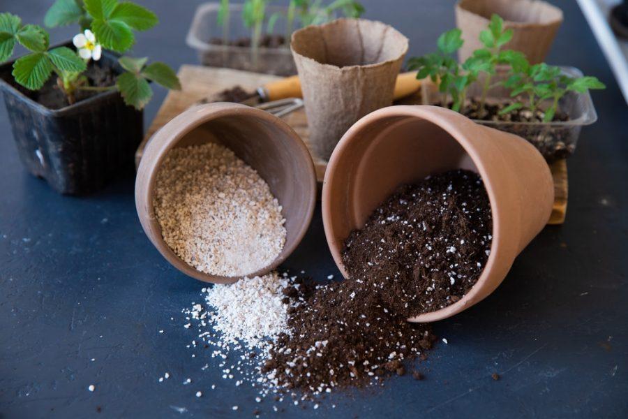 Khám phá công dụng của đá Perlite trong giá thể trồng lan
