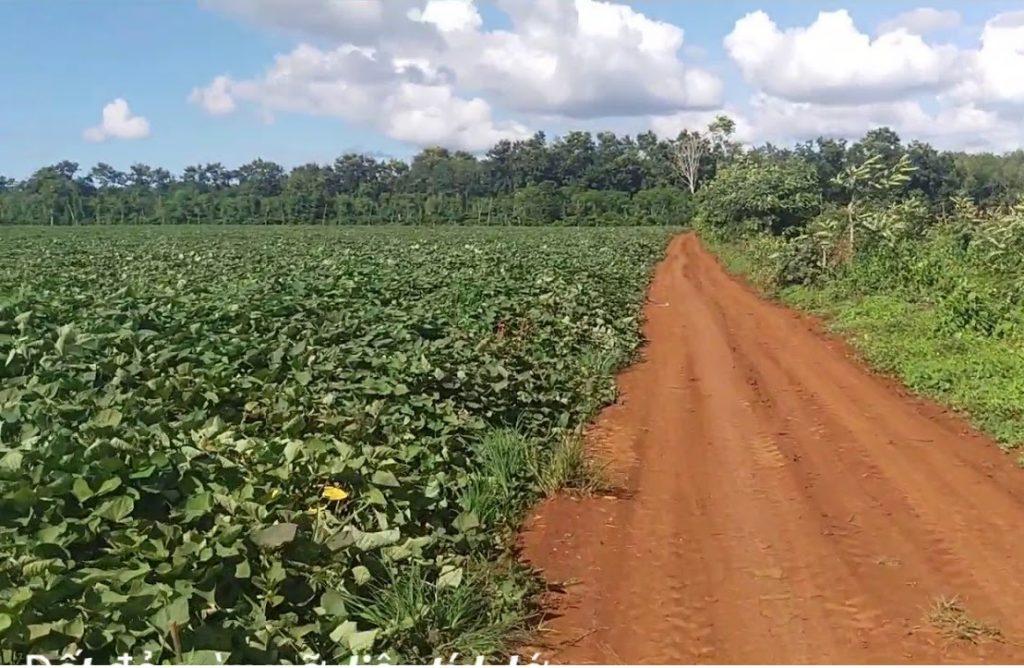 Nguyên liệu sản xuất đất sạch đóng bao: Đất đỏ bazan