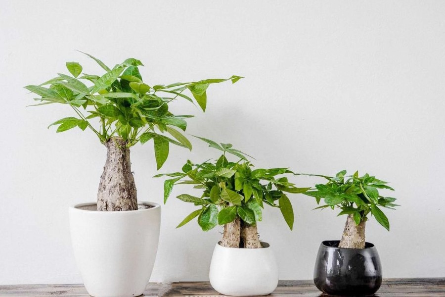 Đất trồng cây nội thất cần đảm bảo những yếu tố nào?