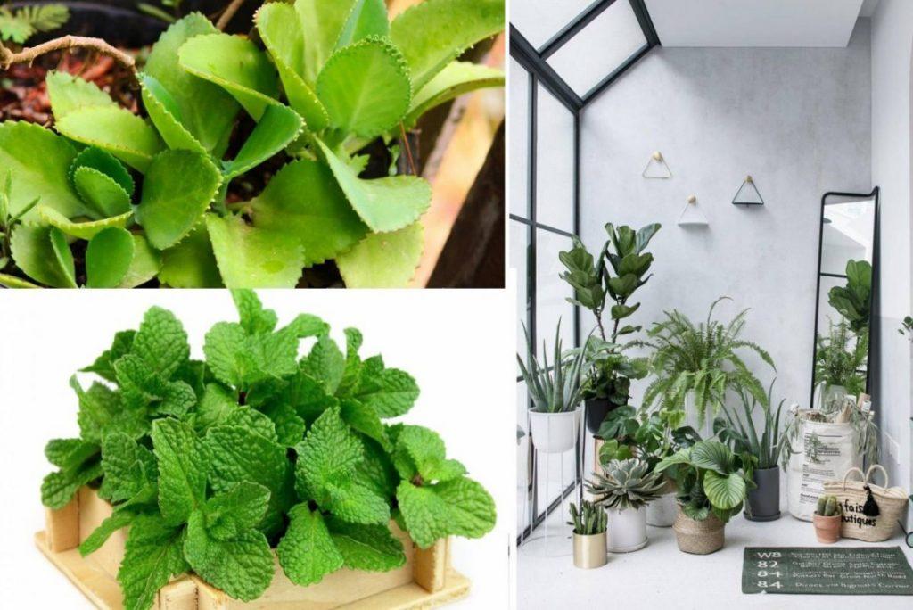 đất trồng cây trong nhà