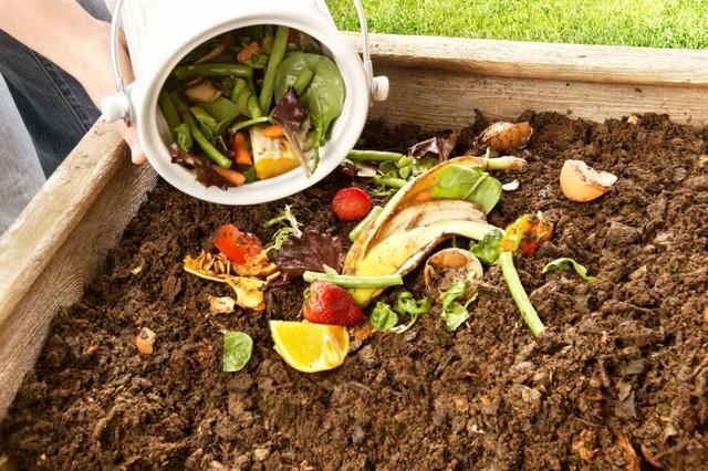 Cách ủ phân trùn quế tốt nhất: ủ phân bằng rác nhà bếp
